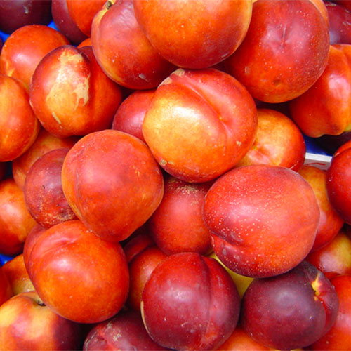 Farm fresh nectarines just outside of Memphis Tennessee!