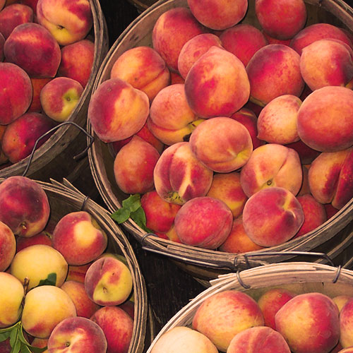 Farm Fresh Tennessee Peaches Grown Locally